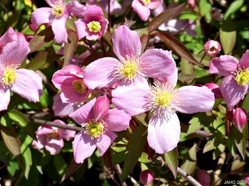 Plante indestructibile în grădină