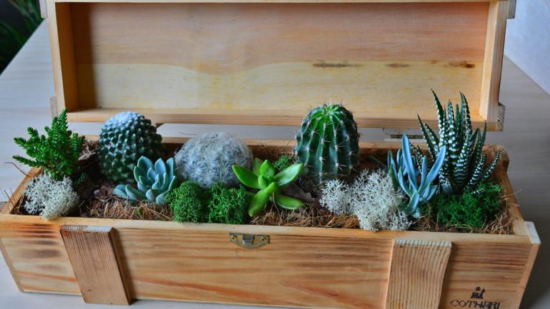 Cactus in memoriam